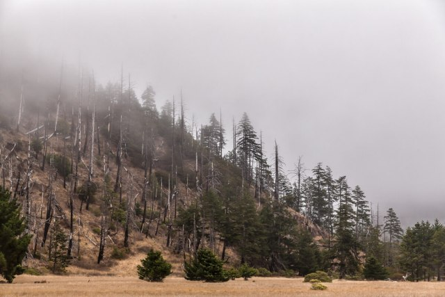 Forest After Forest Fire