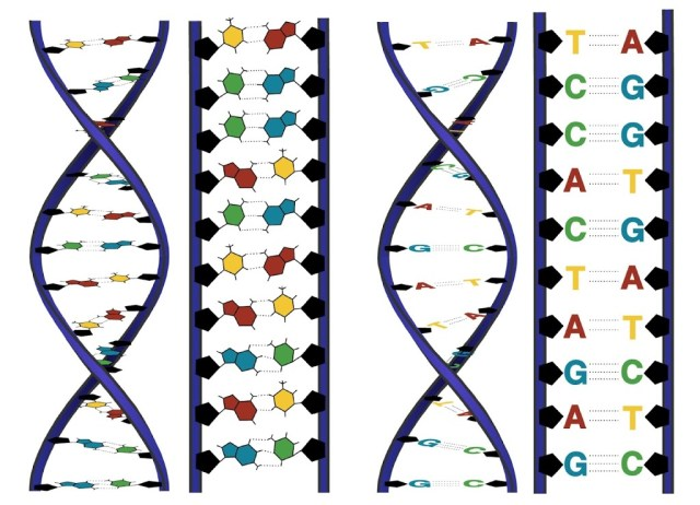 DNA, the genetic code of life
