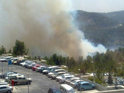 תופעת שריפות היער בישראל – פעולות טרור יזומות