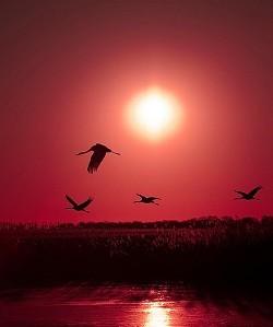 飛鳥與魚 - 公政權_2.0 - udn部落格