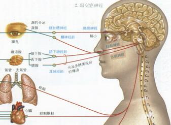 9、頸項生疔瘡 - 穴道、經絡、acupuncture study - udn部落格