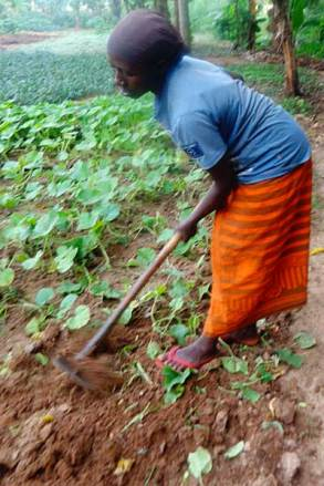 Mariam works hard to have a continual crop.