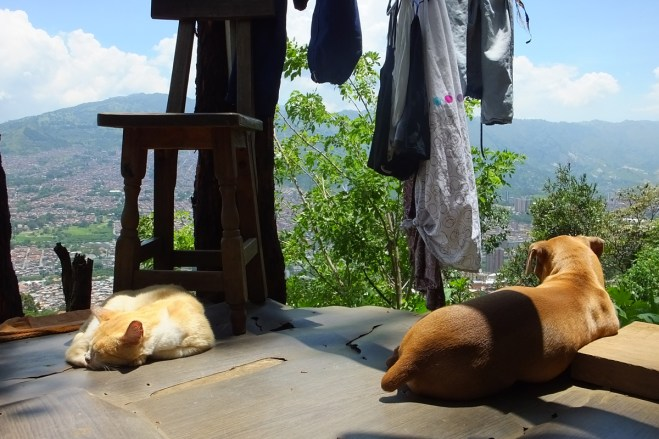 An image of a dog and cat high up on a patio.