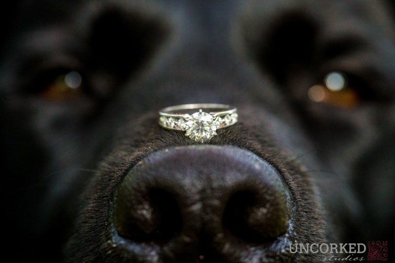 Ring on Dogs Nose