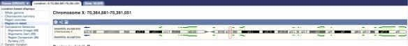 NLGN3 cromozom x