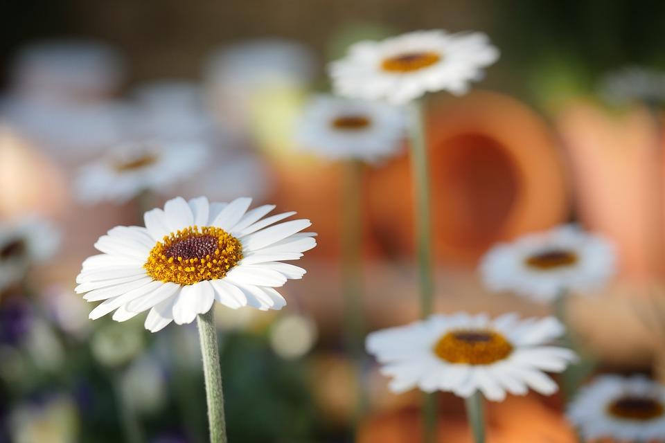 saiba mais sobre a flor da amizade