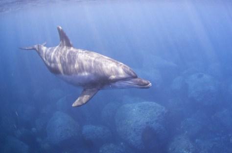 dolphin-blog-dolphin-underwater
