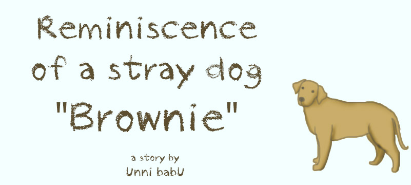 Reminiscence of a stray dog — Brownie. A story by unni babu