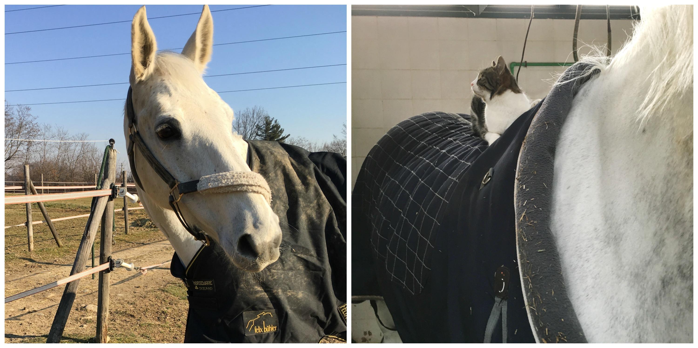 Le coperte: ma i cavalli le amano?