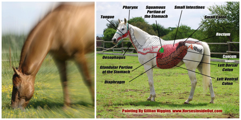 www.horseinsideout.com