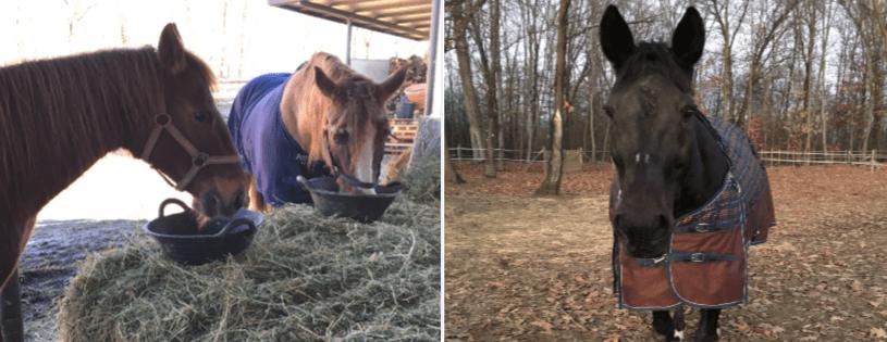Morte cavalli anziani