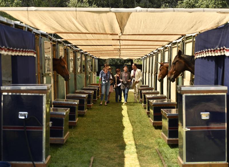 Cavalli in gara