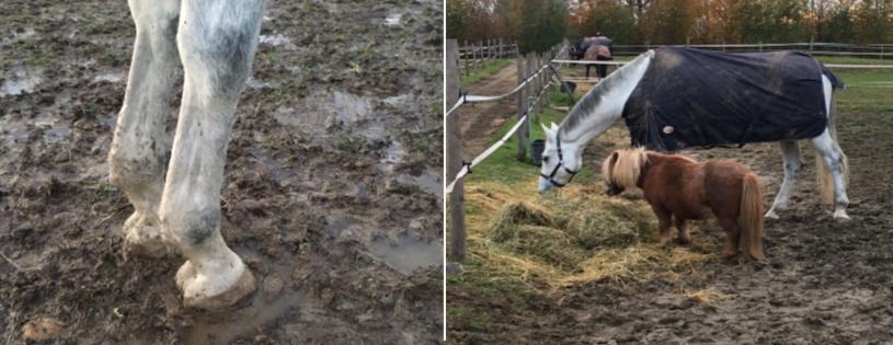 Il fango, dannoso si, ma non sempre