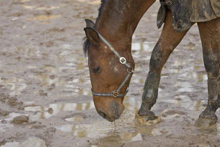 cavallo nel fango