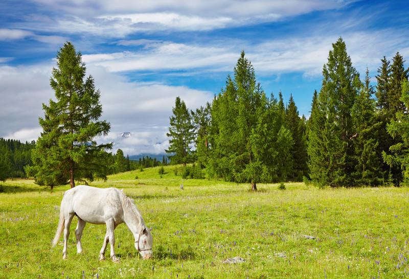 cavallo al paddock