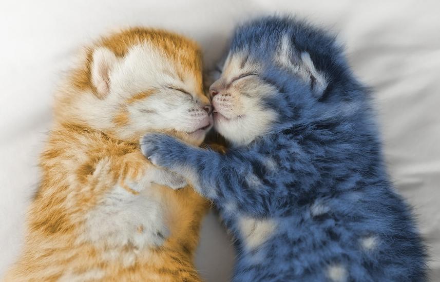 utc introduces new kitten