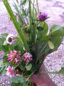 pasture bouquet