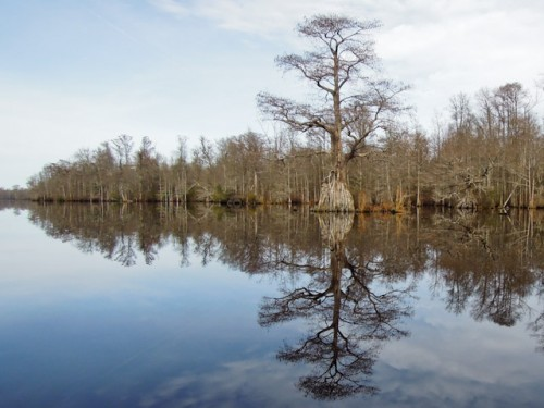 A final view of the Great Dismal Swamp.