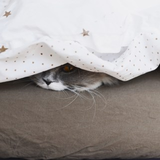 chat-couette