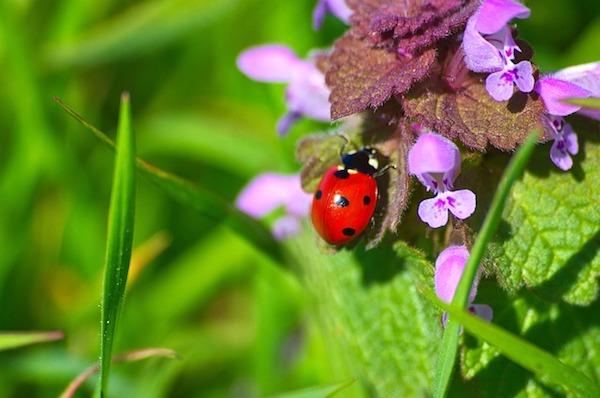 Ladybird Wildlife Garden
