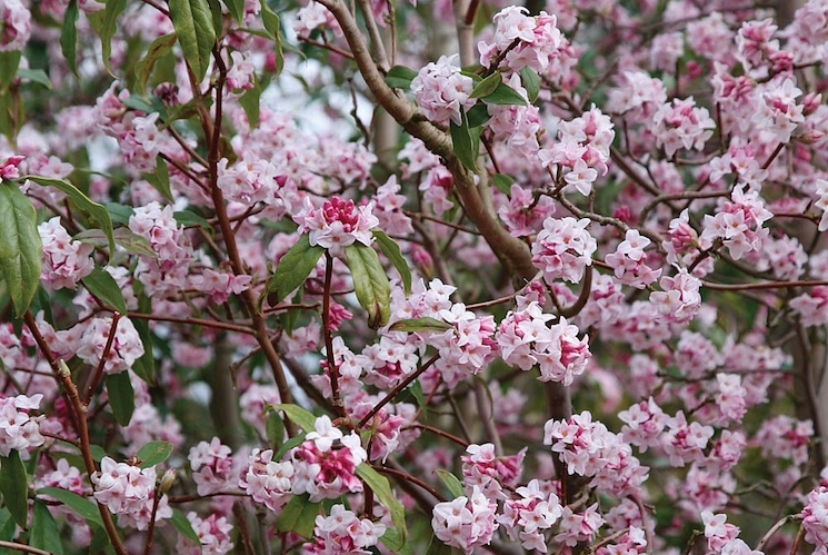 lovely pink blossom plants