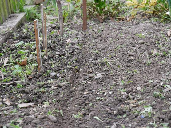 A shallow trench in the garden for seed planting