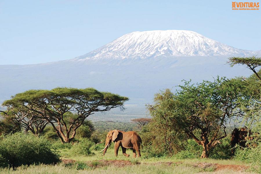 Kenya e Tanzânia