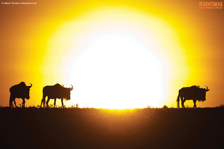 Kenya e Tanzânia - Mara Plains Camp - Wildlife - Great Plains Conservation
