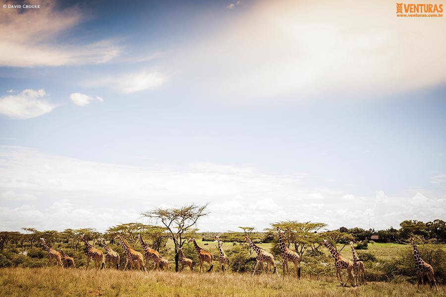 Kenya Tanzânia Segera David Crookes - Kenya e Tanzânia - A natureza selvagem do leste