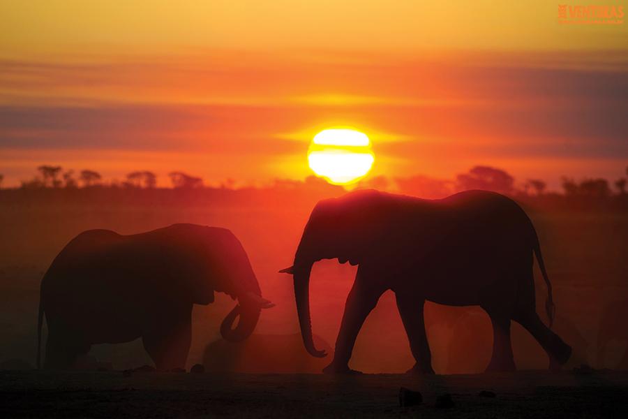 Zâmbia e Zimbabwe 02 - Zâmbia ou Zimbabwe - Exóticos vizinhos