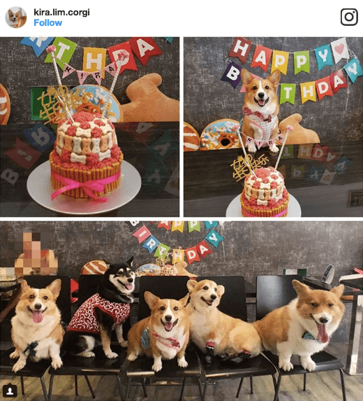 Dogs-birthday-venues-venuerific-blog-INU-pet-friendly-cafe-instagram-picture