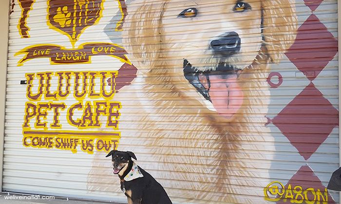 Dogs-birthday-venues-venuerific-blog-ulu-pet-cafe-black-dog