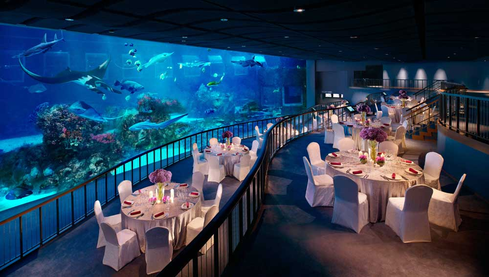 dining in front of a fish tank at sea aquarium