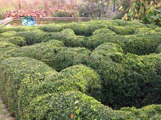 Узловой сад