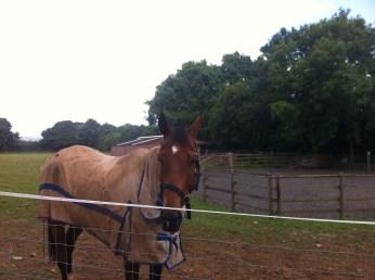 Лошадь на отдыхе