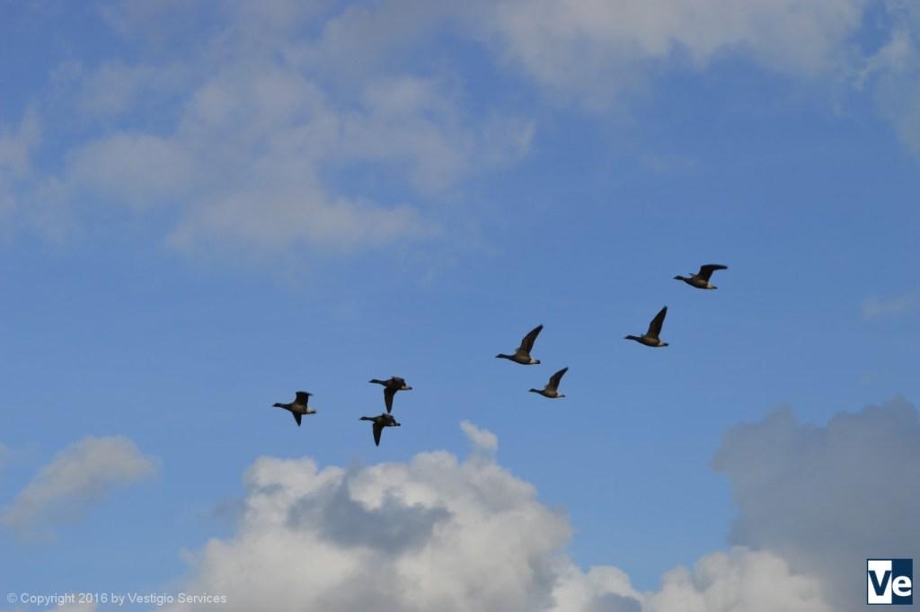 Birdwatching: увлечение британцев орнитологией