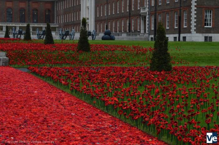 Chelsea Flower Show 2016: красные маки памяти