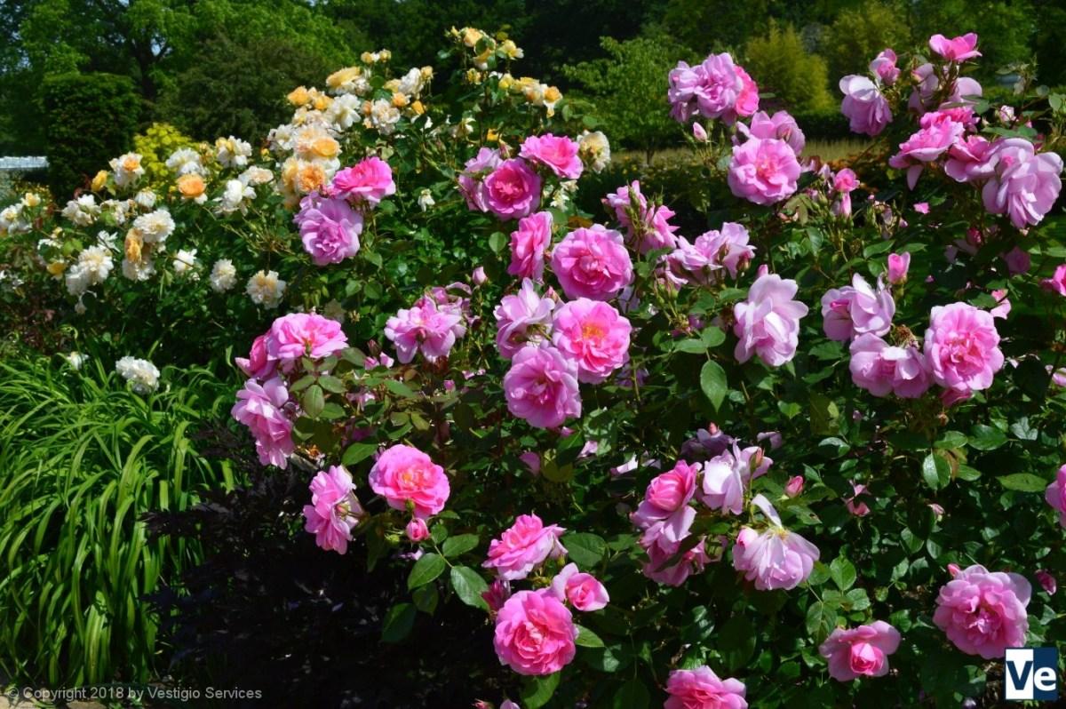 Роберт Майерс: розовые эксперименты