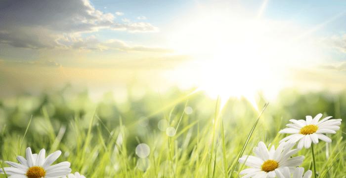 3. Vereinsnewsletter 2021 – Verein Gesundheit, natur & therapie