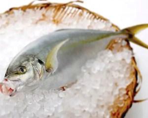 鯵とは違う高級魚縞鯵(シマアジ)!違いを説明します!