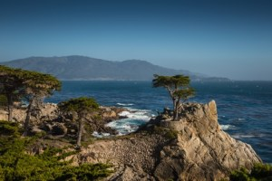 Lone tree at Monterey