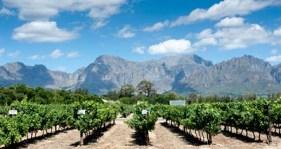 ca wine month.jpg
