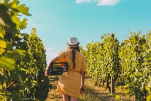 Impatiently Awaiting a Return to 'Normal' in Wine Country
