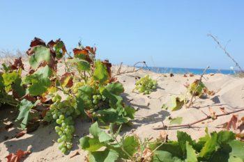 Insolia Carinda spiaggia sabbia