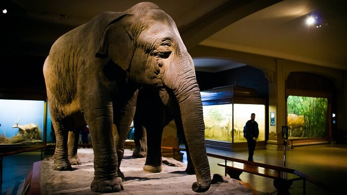 Museo de Histora Natural en Nueva York