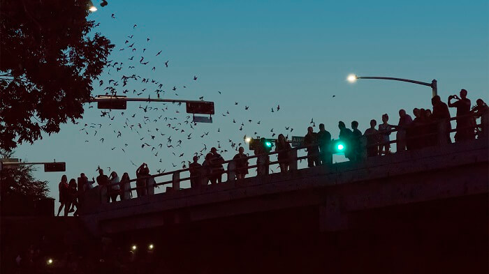 Puente de Waugh Drive en Houston