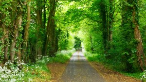 A narrow road through the middle of a very plush green forest