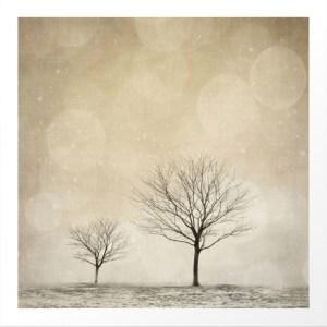 Winter Trees via Dot and Bo