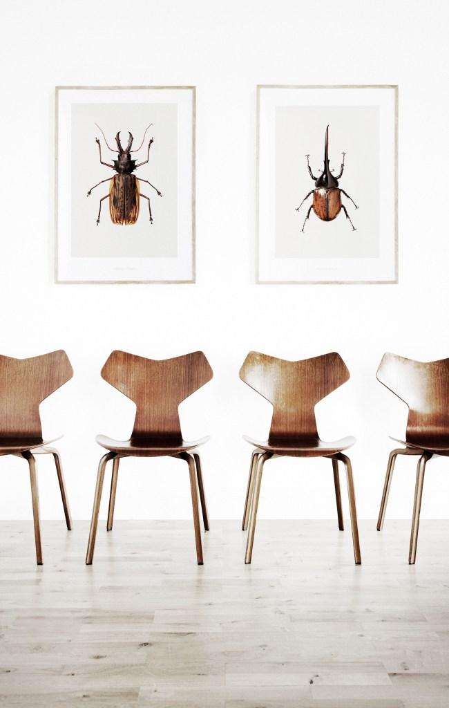 Beetles and Beetles