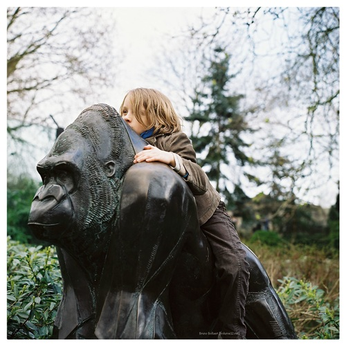 Gare au gorille!